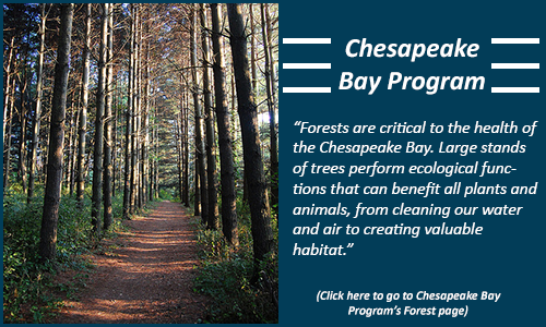Chesapeake Bay Forest Program